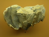 epipaleorithique