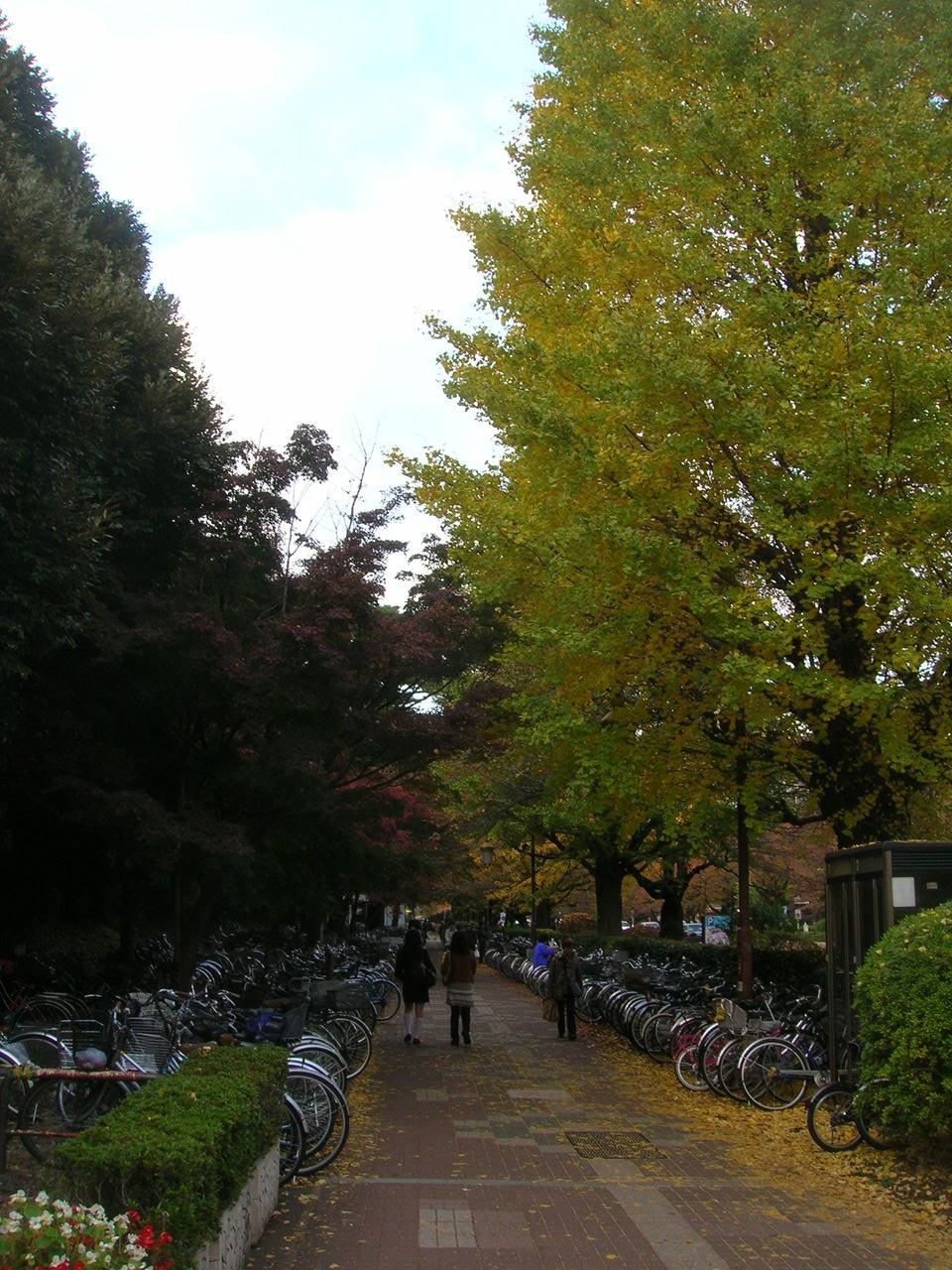 国立2010秋の「大学通り」 106