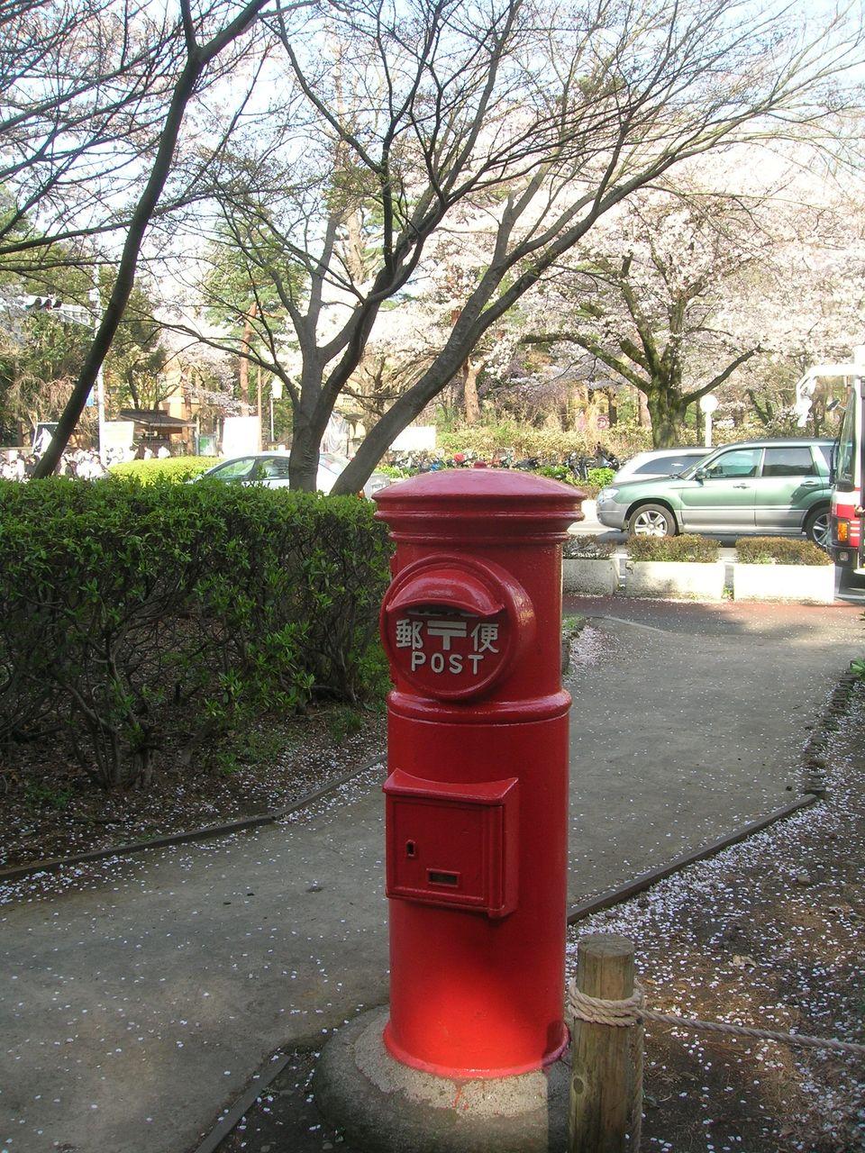 国立2010春桜満開 128