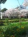 国立・台場・新橋2010春 027