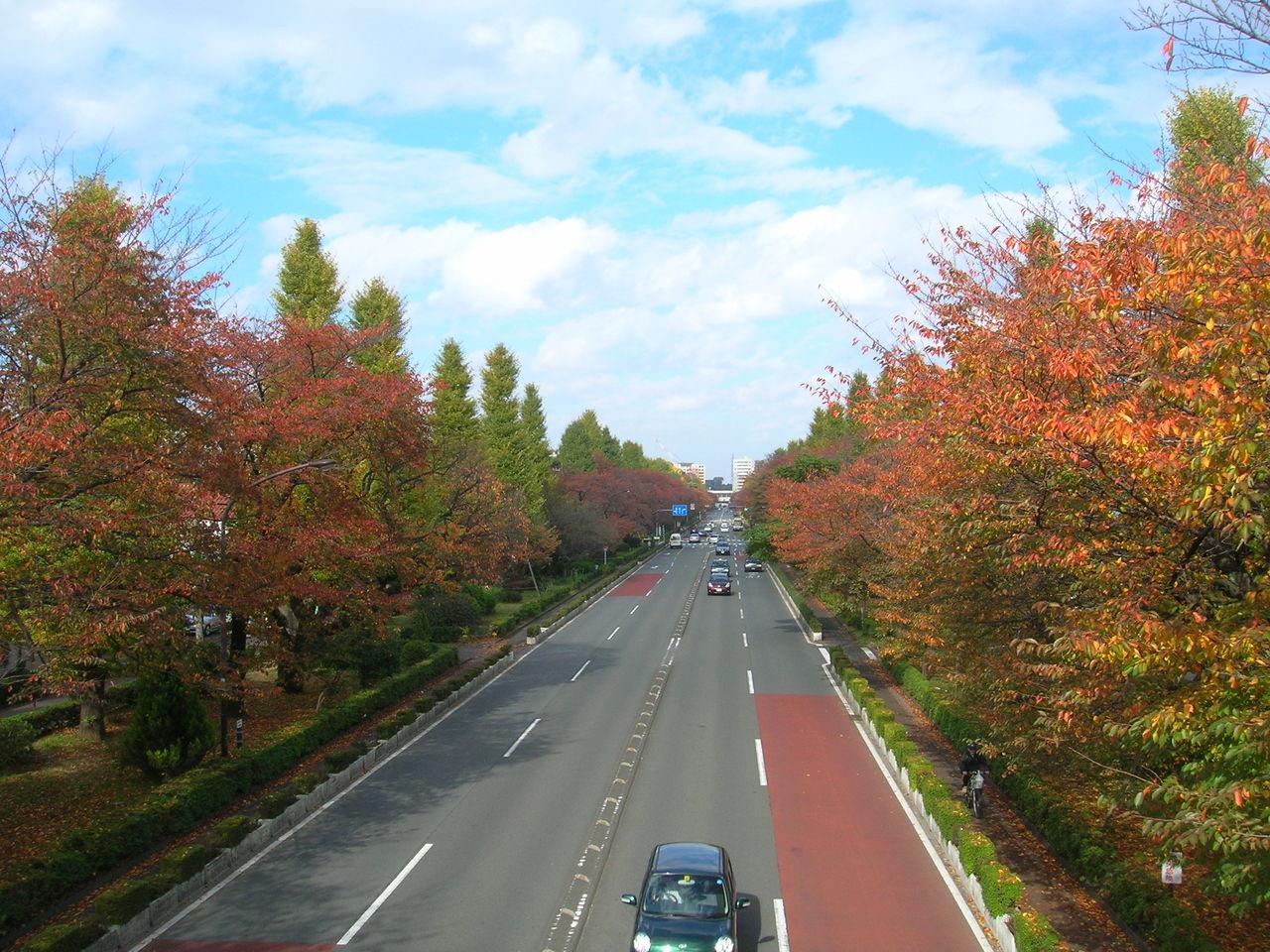 国立2010秋の「大学通り」 125