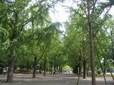 熊本県庁前並木道