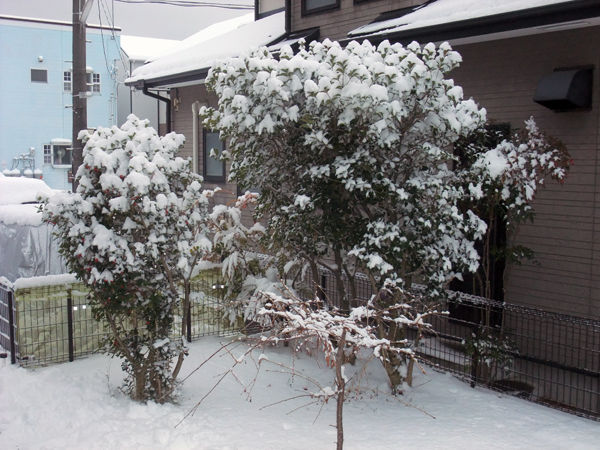 snow20190126