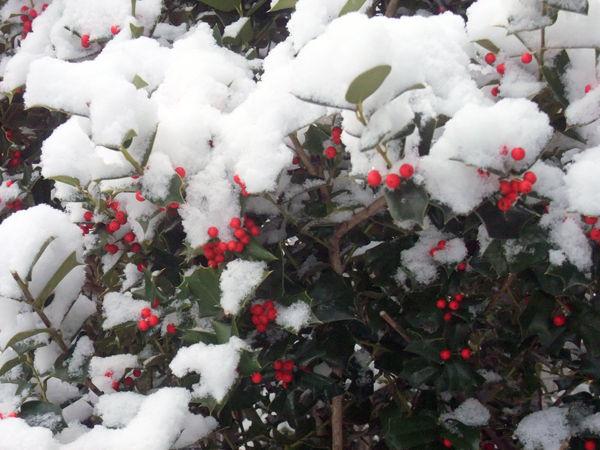 snow20190122