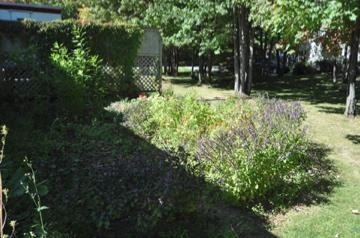 庭の周りのバジル達