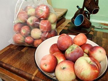 2012年りんご狩り収穫