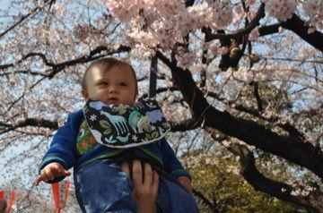上野公園Apr5