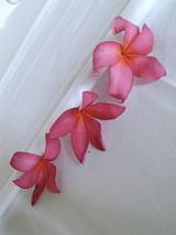 バリの花2