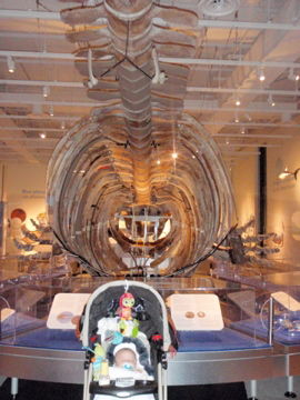 Canadian Museum of Nature2