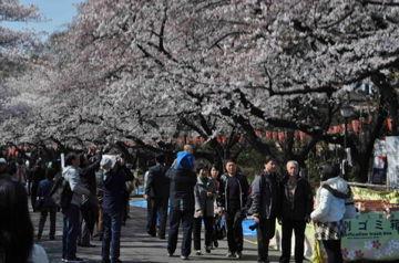お花見@上野公園