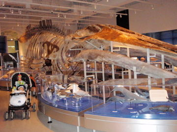 Canadian Museum of Nature1