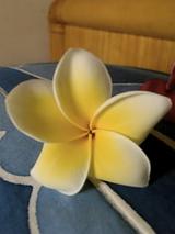 バリの花 プルメリア