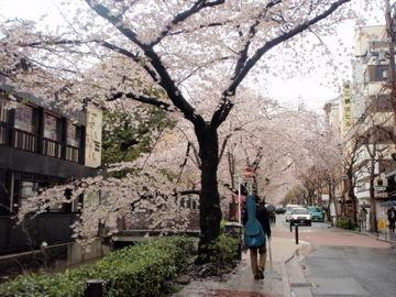 Apr11,2012 京都 木屋町通