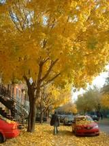 黄金色のモントリオール