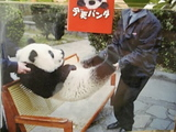 なまけものパンダ