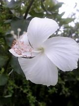 バリの花1