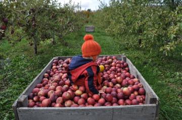 りんごのベッド