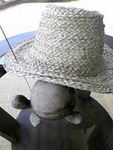 シドゥマンのホテルで亀と休憩