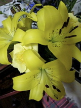 お花が咲きました2