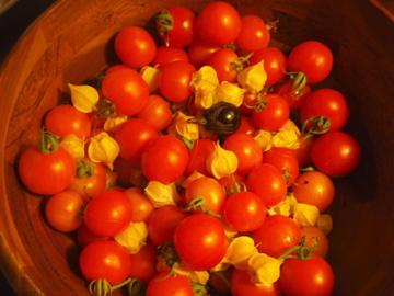 トマト&グランドチェリー