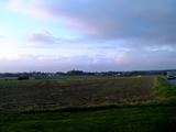 白ビーツ畑