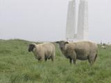 フランス?アラス、、、羊?!