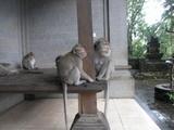 モンキーフォレストのお猿
