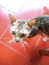 ロビナは猫も悲し気?!
