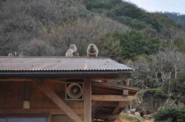 Apr10,2012 嵐山