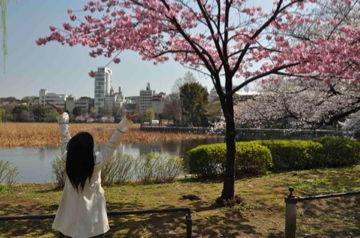 桜咲く、上野公園
