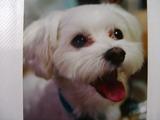 幻の愛犬!ラッキー
