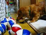 マロン大好きボールを捜す