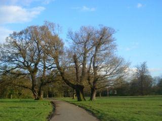 Wythenshawe Park 2