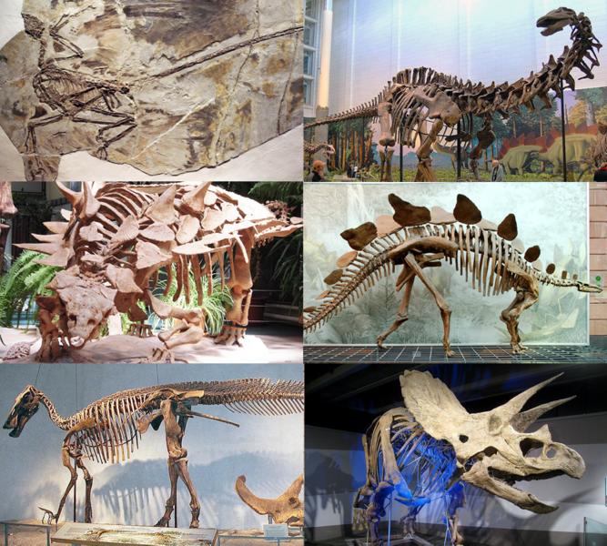 【国内最大】恐竜の全身骨格の化石見つかる!!!北海道むかわ町