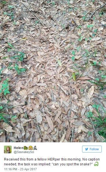 【むず】「どこにヘビがいるかわかる?」意外な難問に苦戦する人が続出!!!落ち葉にヘビが隠れている画像
