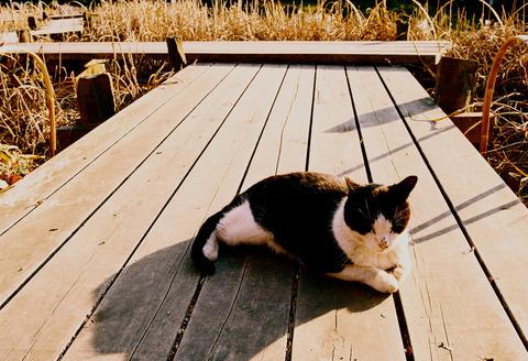 猫特集 [昭和記念公園] : フイルム編