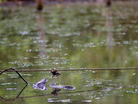 散策 [舞岡公園/さくらなみ池] : PEN E-P3 + Rollei Sonnar HFT 2.8/135