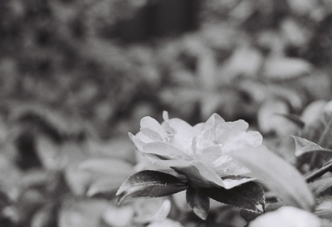 写真 - 9134