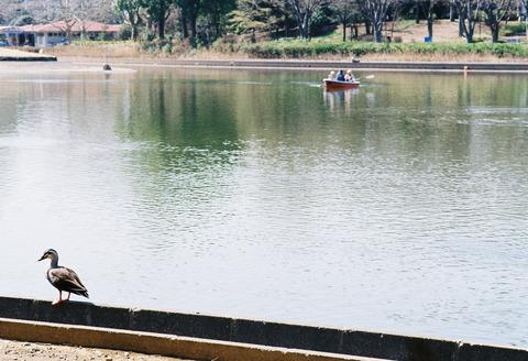 散策 [昭和記念公園] : F100 + AF-S NIKKOR 50mm f/1.4G