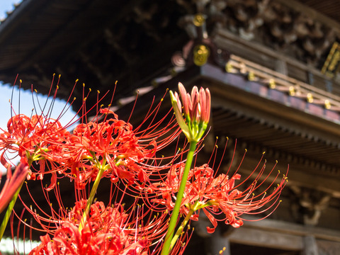 散策 [鎌倉・英勝寺] : PEN E-P3 + M.ZUIKO DIGITAL 14-42mm F3.5-5.6 II R