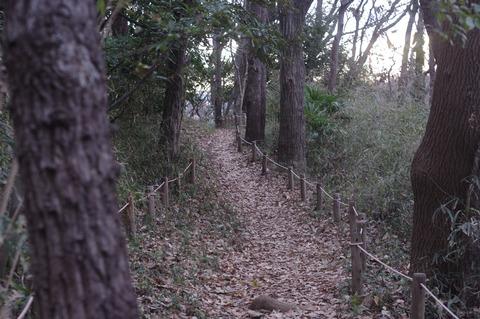 散策 [舞岡公園]:K-r + SMC PENTAX-M 50mm F1.7