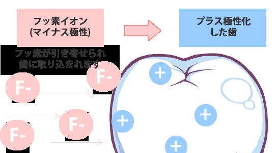 yoboushika546c