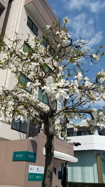 始まりの『春』