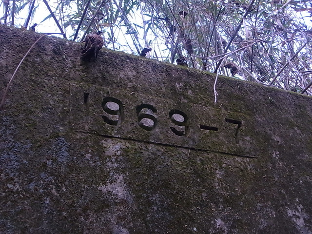 RIMG6706
