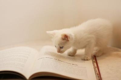 cat_book_1