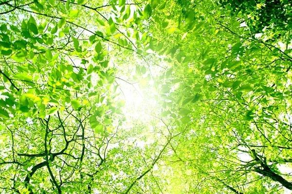 sunlight_1