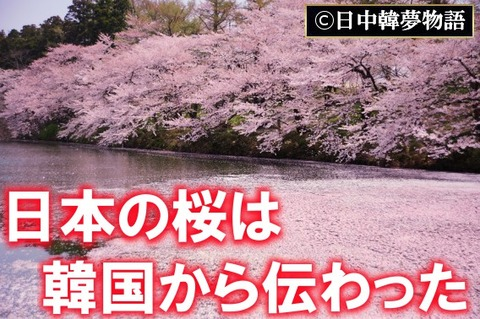 新潟県の桜