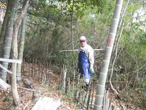竹林柵作り
