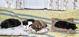 201608 ソファの猫たち