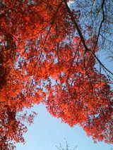 東福寺で紅葉三昧